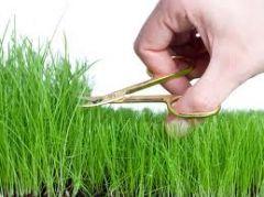 Gartenarbeiten wie diese allerdings nur nach Einnahme gesetzlich erlaubter Betäubungsmittel !