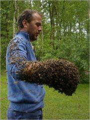 honig kaufen versand von honig honig vom imker honig online. Black Bedroom Furniture Sets. Home Design Ideas